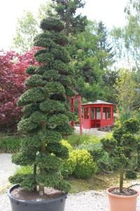 Oberpfalz Bonsai